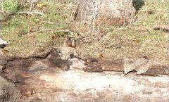 "Rock Climbing Photo: Marmot peeking out. ""HELLOOOOO!"""