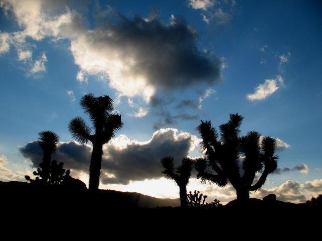 Looking west from Ryan Campground, Joshua Tree NP