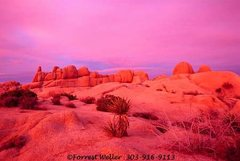 Rock Climbing Photo: Joshua Tree Sunrise