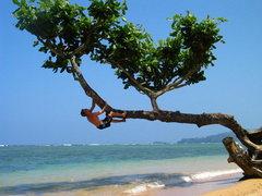 Rock Climbing Photo: hawaii 5.8