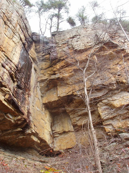 Rock Climbing Photo: hands is the obvious crack just left of the tree i...