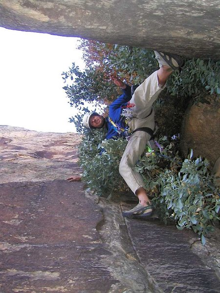 High on the route, stemming on the tree pitch.