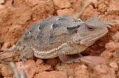 Rock Climbing Photo: lizard.
