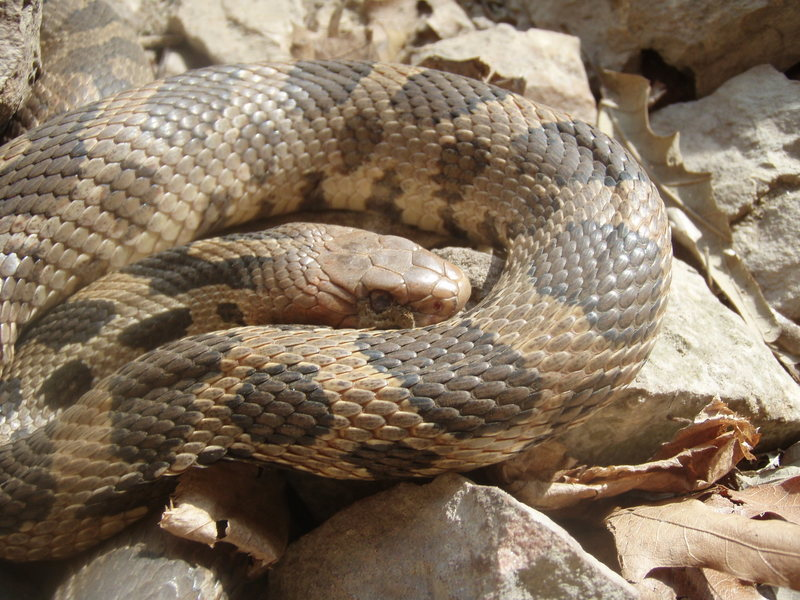 Rock Climbing Photo: Our spring friend the snake