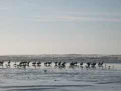 Rock Climbing Photo: Pelicans and surf, Moonstone Beach