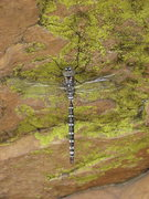 Rock Climbing Photo: Dragonfly @ Horsetooth, Photo by John M.