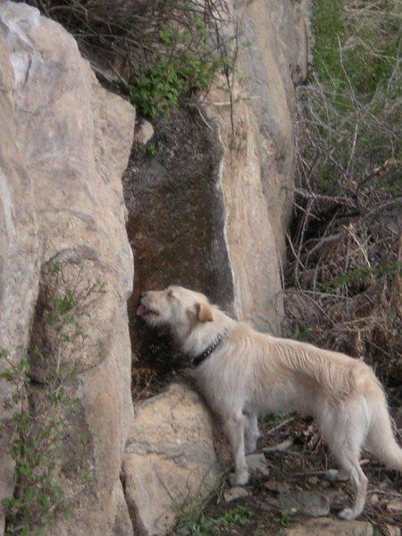 Rock Climbing Photo: silly dog