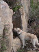 Rock Climbing Photo: silly dog