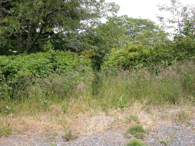 The trail to Footsteps is often a bit overgrown. Look carefully on the west of Hwy 101 about 40-50 feet north of milepost 13.42