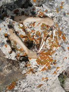 Rock Climbing Photo: The gnawed on fawn legs left on the summit from so...