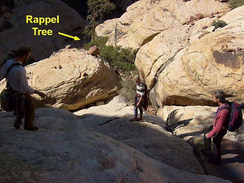 The indicated tree might be the one from which we rappelled.