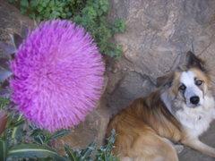 Rock Climbing Photo: pretty dog