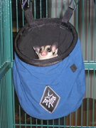 Rock Climbing Photo: Sugar Glider peeks out of her custom bivi sac.