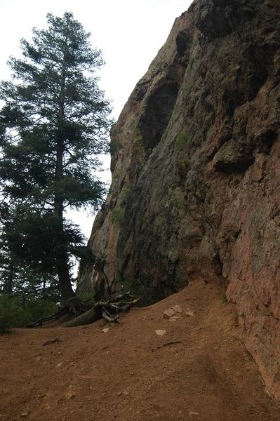 Rock Climbing Photo: Cheyenne starts just past the big tree in the phot...
