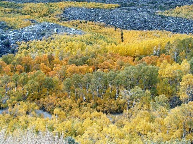 Rock Climbing Photo: Fall colors in Laurel Canyon, Sierra Eastside