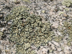 Rock Climbing Photo: Lichen and granite, Tramway.