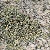 Lichen and granite, Tramway.