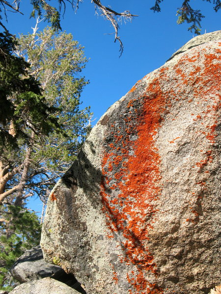 Rock Climbing Photo: Colorful lichen and blue skies, Tramway