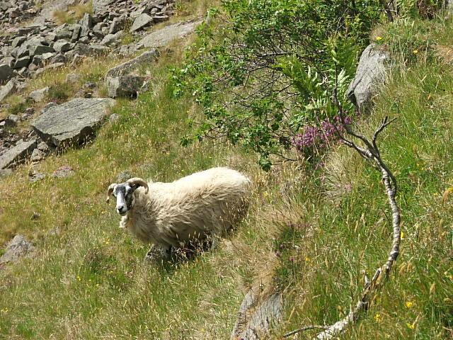 Rock Climbing Photo: Wildlife...