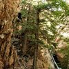 McRae Williams <br> The Right Pile 5.11d <br> Big Cottonwood Canyon, UT