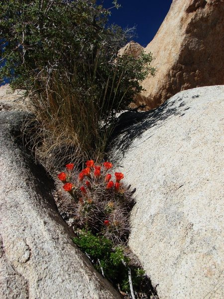 Rock Climbing Photo: Spring Bloom on the Barker Dam hike.  April 08.