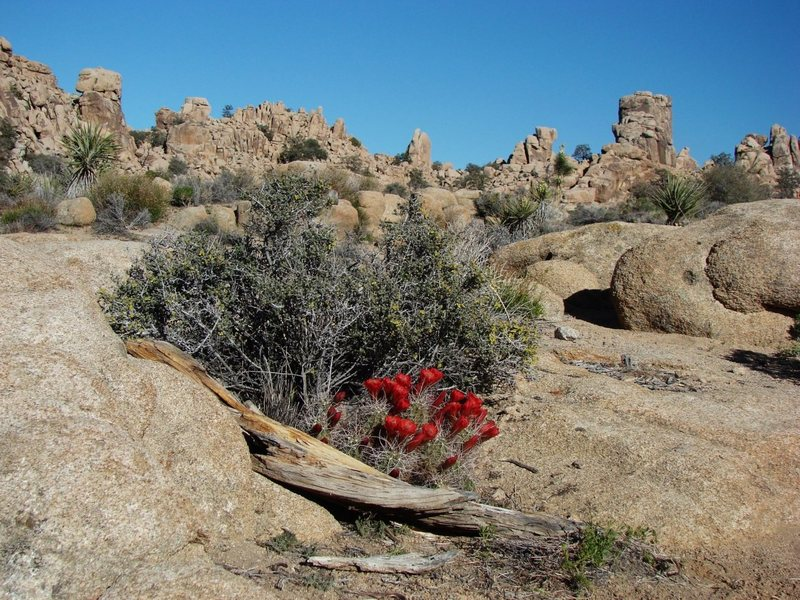 Rock Climbing Photo: Spring Bloom in the Real Hidden Valley, amazing.  ...