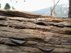 Rock Climbing Photo: The Penny Tree is right off the trail and not far ...