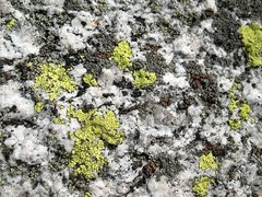 Rock Climbing Photo: Granite detail, Tahquitz Rock