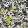 Granite detail, Tahquitz Rock