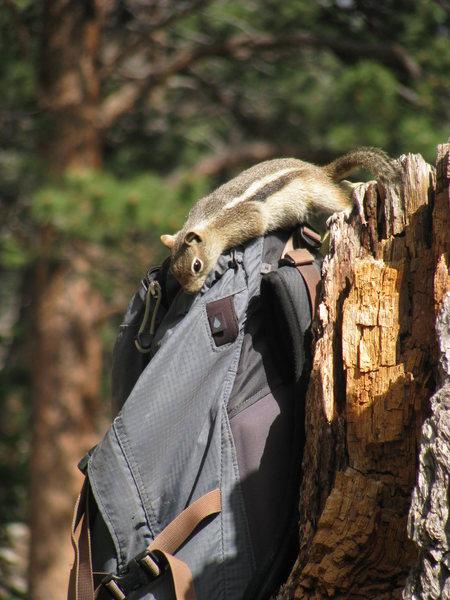 Bandit in action
