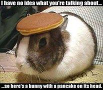 Rock Climbing Photo: Bunny pancake