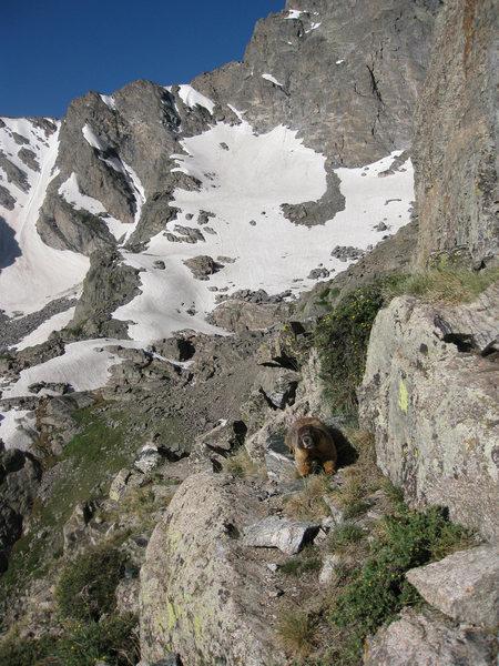 An alpine panhandler.