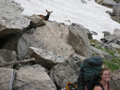 Rock Climbing Photo: A doe elk takes a mild interest in us as we walk o...