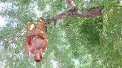 Rock Climbing Photo: A double tree-bar!