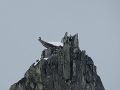 Rock Climbing Photo: Summit diving board of Middle Troll. We enjoyed th...