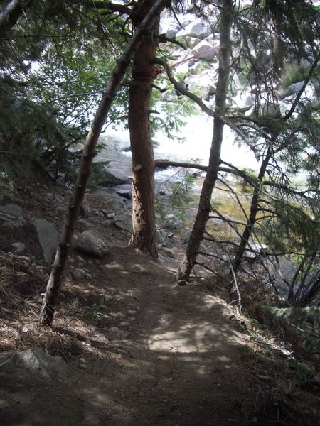 Rock Climbing Photo: Trail through the forest, South bank Boulder Creek...