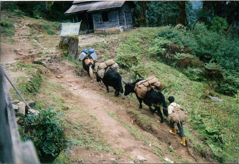 Rock Climbing Photo: Pack animal train arriving Bakhim on the trek to D...