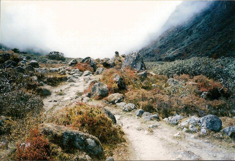 Rock Climbing Photo: Trail flora near Samiti Pokhari en route to Guicha...