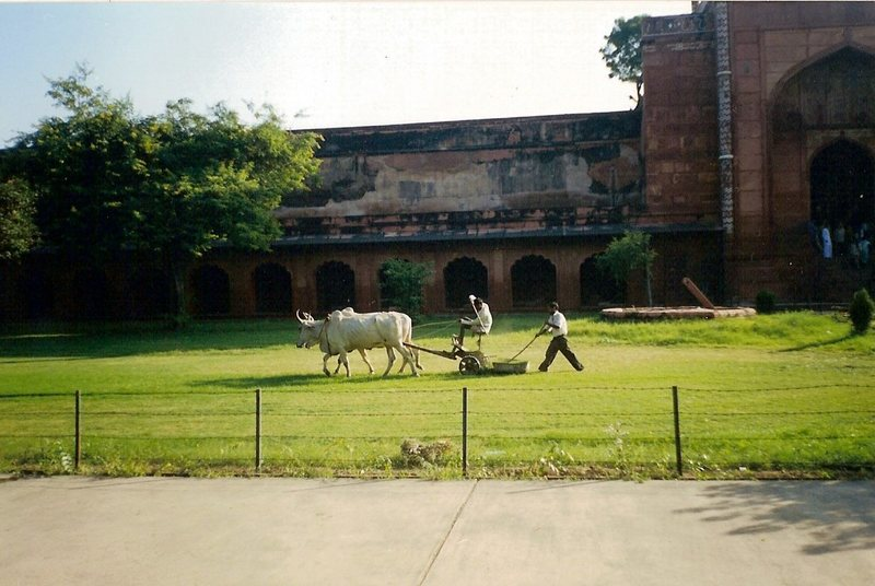 The Indian version of a lawnmower outside the Taj Mahal. In India, no job can be limited to just one person.