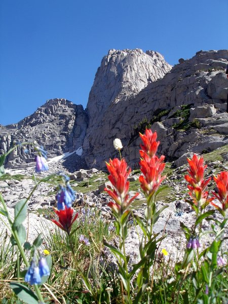 Flowers in The Winds. You can see the K-Crack on the S. Buttress of Pingora in the background if you look closely.