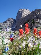Rock Climbing Photo: Flowers in The Winds. You can see the K-Crack on t...