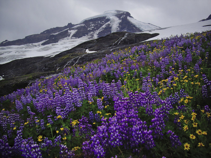 August flowers at Mt. Baker.