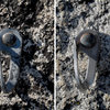 Many of the bolts at Dome Rock are button-head compression bolts. Seen in this side-by-side comparison are 2 different sizes that were found on a single route.<br> <br>