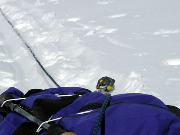 This bird just appeared out of nowhere on the Kahiltna Glacier and was perched on the rope as we rested.