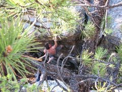 Rock Climbing Photo: The Cheat