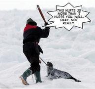 Rock Climbing Photo: beat seals