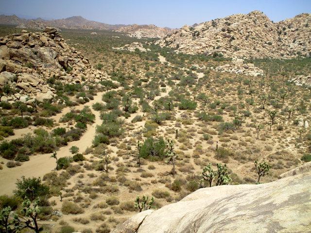Rock Climbing Photo: echo canyon, JTree