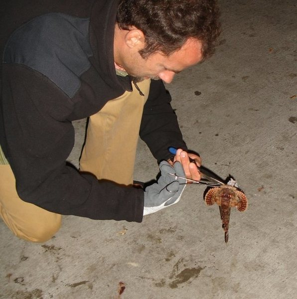 Sweetie, can you get the Scorpion Fish off the hook? I would, but my hand is full of Cheez-Its.<br> <br> PS...I like you Jonny. ; )<br> <br> Boyfriends are nice.<br> <br> (My catch 9/2/08, Newport Beach pier)<br> <br>