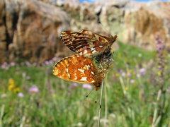 Rock Climbing Photo: butterfly porn