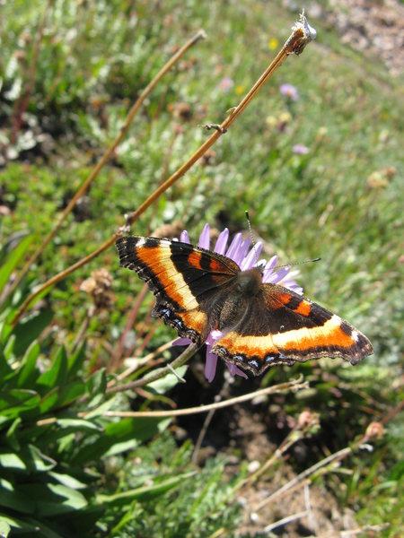 Rock Climbing Photo: butterfly